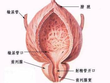 前列腺囊肿要做哪些检查化验